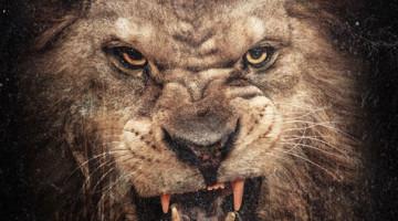 50 cent- Animal Ambition detalles de lanzamiento